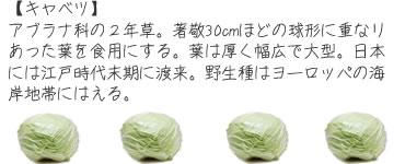 ch_mame03