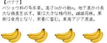 ch_mame05