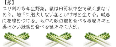 ch_mame06